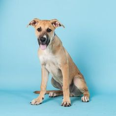 Liam is available for adoption at our Mission campus!
