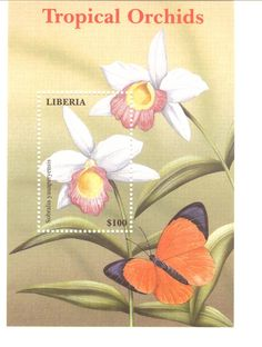 This webpage is dedicated to stamps which feature flowers from the tropical orchid genus Sobralia. It's part of the Sobralia Pages website, created by Nina Rach. Valley Of Flowers, Liberia, You Are The World, Flower Stamp, Stamp Collecting, Horticulture, Mailbox, Postage Stamps, Cover Art