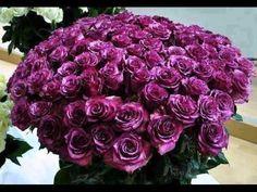 A huge purple rose bouquet! Flora Flowers, Beautiful Bouquet Of Flowers, Amazing Flowers, Beautiful Roses, Beautiful Flowers, Beautiful Things, Rose Violette, Unique Flower Arrangements, Flower Pictures