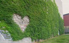 groene muur heart