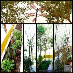 my garden 26/2/2016
