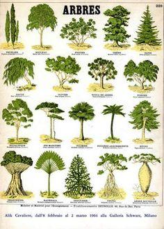 baumbestimmung b ume pinterest wachsenden pflanzen schulhof und baum. Black Bedroom Furniture Sets. Home Design Ideas