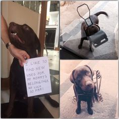 Dog Shame | I LOVE to play! With anything!