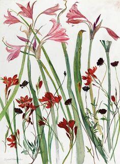 """Décidément les vieilles dames anglaises me donnent envie de vieillir... Peintures Elisabeth Blackadder Publié par Corinne Dreyfuss pour """"Ma petite botanique"""""""