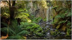 Hopetoun falls, Great Otway National Park Australia | Flickr