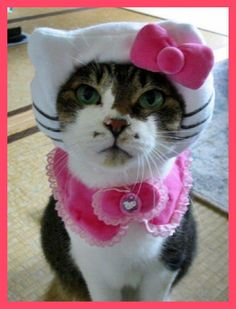 its hello kitty in real lifee...kinda. but its adorable.