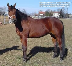 Quarter Horse..How the west was one