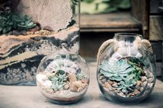 three desert terrariums