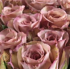 Shop Fabulous Florals' huge selection of fresh-cut wholesale flowers, bulk flowers and DIY wedding flowers and foliage, including Hypnose Roses. Diy Wedding Bouquet, Diy Wedding Flowers, Diy Flowers, Colorful Flowers, Lavender Flowers, Purple Roses, Pink, Wedding Flower Packages, Flower Packaging