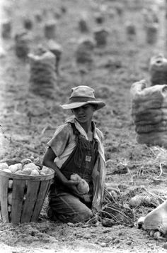 Migrant workers harvesting potatoes, 1959.      By Michael Rougier