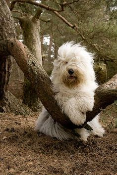 Old English Sheepdog--very cute, this is my favorite @ Elena Rivas Cute Puppies, Cute Dogs, Dogs And Puppies, Doggies, Animals And Pets, Funny Animals, Cute Animals, Beautiful Dogs, Animals Beautiful