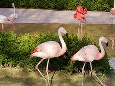 서울대공원 동물원 플라밍고 (seoul grand park zoo flamingo)