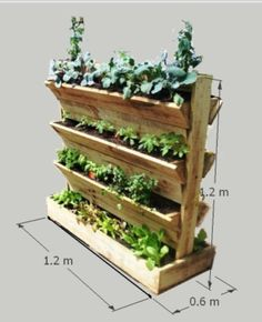 I really want to grow my own herb garden