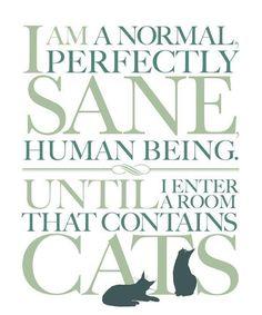 I'm a crazy cat lady by proxy :)