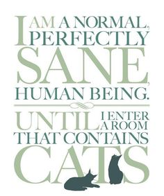 I'm a crazy cat lady