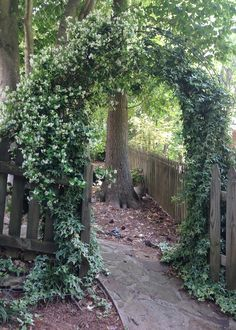 Arbor with confederate jasmine and variegated ivy.  Atlanta, GA