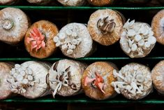 To grow mushrooms is to let things rot, so something& a lot of things are rotten in the state of Pennsylvania. Large Mushroom, Mushroom Art, Mushroom Fungi, Garden Mushrooms, Growing Mushrooms, Pennsylvania, Stuffed Mushrooms, Food, Limestone Caves
