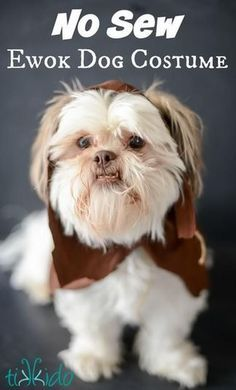 Star Wars Ewok DIY dog costume, see more at http://diyready.com/diy-dog-costume-ideas-halloween-fun-for-your-pooch
