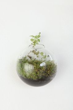 Glass wall bubble vase