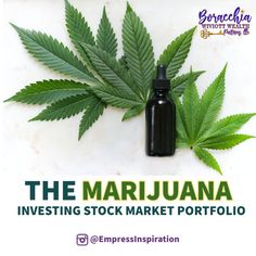 The legalization of marijuana has yielded the cannabis companies to grow their revenues rapidly.  This sector is still in early stages, however, if the United States government continue to de - regulate and potentially legalize marijuana; These Cannabis stocks will skyrocket. For the latest News & Financial Tips follow us on Instagram: @EmpressInspiration ☢️Disclaimer: This message does not constitute advice. It is informational and past performance does not indicate any future… Financial Tips, Financial Planning, Best Stocks To Buy, Stock Portfolio, Stock Market Investing, Investment Portfolio, Wealth Management, Cannabis, United States