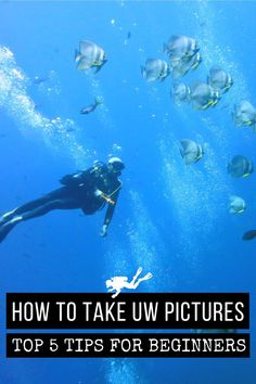 Are you tired of bringing back green pictures from your dives? Here my top 5 tips to start taking better pictures underwater today! #Scubadiving #UWPhotography #Underwater #Photography #Scuba #Diving Green Pictures, Cool Pictures, Photos Sous-marines, Best Waterproof Camera, Aquatic Ecosystem, Underwater Pictures, Shark Swimming, Underwater Photographer, Ocean Life