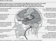 Music on the mind and how it is processed in the brain