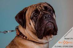 Handmade Leather Dog Collar for Bullmastiff