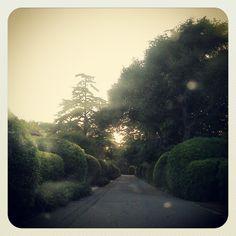 Magic in Montecito