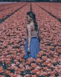 Amsterdam Tulips, My Flower, Flowers, Portraits, Instagram, Head Shots, Portrait Photography, Royal Icing Flowers, Flower