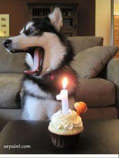 1st Birthday Dog