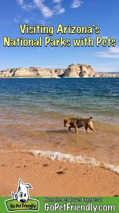 Arizona has some awesome national parks. If you're planning a visit with your dog, check out these tips from the Pet Travel Experts at gopetfriendly.com to help you have a great time! #dogfriendly #pettravel #RVlife #Arizona Navajo National Monument, Montezuma Castle National Monument, Arizona National Parks, Grand Canyon National Park, Arizona Road Trip, Arizona Travel, Dog Travel, Travel Usa, Visit Arizona
