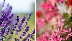 """Jardinier et auteur de """"Les bonnes associations de plantes"""", Claude Bureaux présente les plantes répulsives, des insecticides naturels anti-moustiques et anti-guêpes..."""
