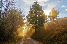 Sunrays by Matthew Vavrek on 500px