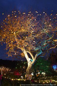 Butchart Gardens @ Christmas (Victoria, British Columbia)