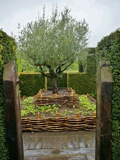 Olea atop a multilevel wattle bed | by KarlGercens.com GARDEN LECTURES