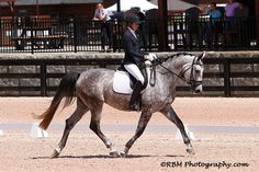 Fine Diamond MF - Wonderful tempered FEI quality young horse offered for sale! Training to the FEI will be a dream with exceptional gaits and a willingness that makes her special. $45,000