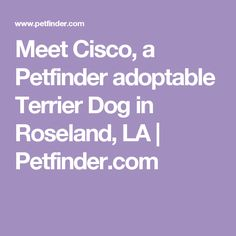 Meet Cisco, a Petfinder adoptable Terrier Dog in Roseland, LA | Petfinder.com