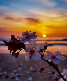 Beautiful Flowers Wallpapers, Beautiful Nature Wallpaper, Pretty Wallpapers, Beautiful Landscapes, Summer Wallpaper, Flower Wallpaper, Wallpaper Backgrounds, Sunset Pictures, Nature Pictures