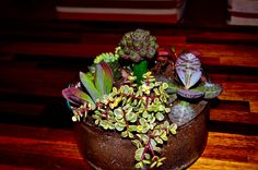 Clustered succulents and a cactus