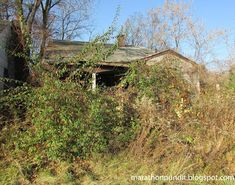 Overgrown bushes surround an abandoned Brightmoor home in Detroit