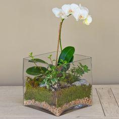 zimmeerpflanzen orchidee terrarium pflege weiße blüten