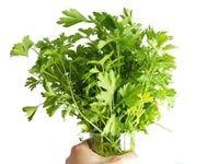 foto de granada Granada, Aloe Vera, Diabetes, Cactus, Essential Oils, Cancer, Healing, Herbs, Herbal Medicine