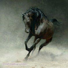 Xcitefun Arab horse
