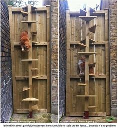 Owners build spiral staircase for arthritic cat to get over garden fence.