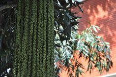 Aula 4 - Linhas verticais - (Nikon D5000)