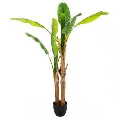 Une note de verdure s'invite dans votre intérieur avec ce Bananier Artificiel. Son pot de couleur noir accueille deux pieds de bananiers aux feuilles vertes.     Marque: 3S. x Home Ficus, Deco Luminaire, Pot Plante, Natural, Plants, Polyester, Dimensions, Plein Air, Marie Claire