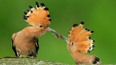 hd birds ile ilgili görsel sonucu