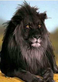 Unique Lion