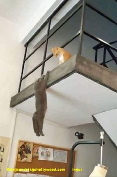 Another Taste of 21 #Funny #Cats Gone Dangerously Bad!