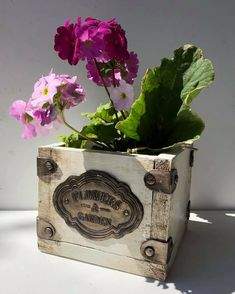 Cactus Y Suculentas, Planter Pots, Workshop, Vase, Flowers, Handmade, Crafts, Vintage, Home Decor